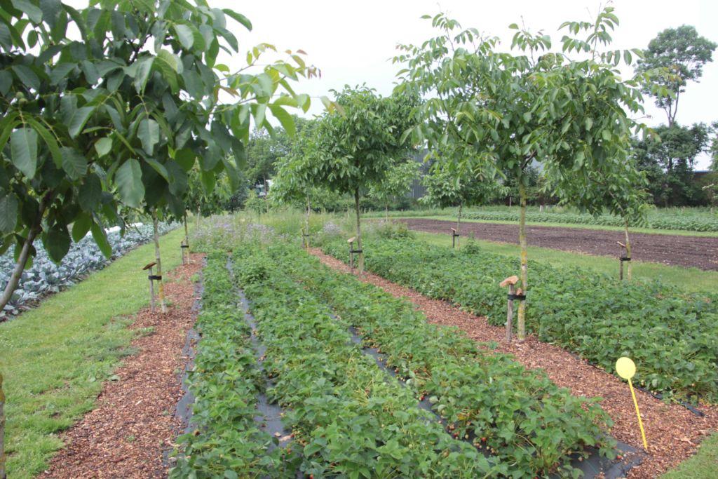 Bijeenkomst agroforestry voor agrariërs