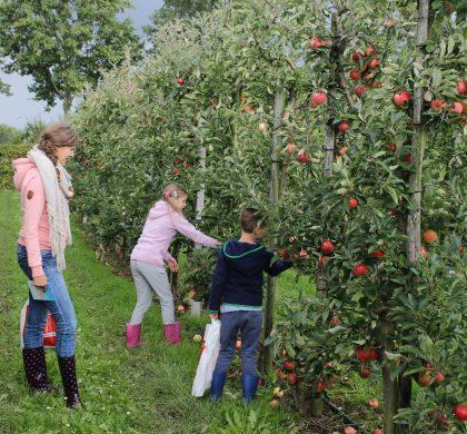 Direct van de boom je eigen appels en peren eten