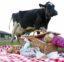 Picknicken bij de boer en fietsen door Altena